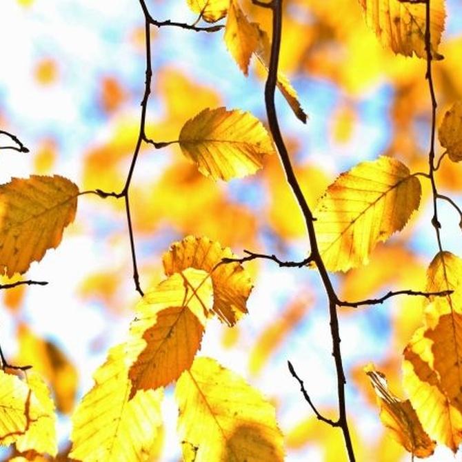 Qué plantas sembrar en otoño en tu jardín