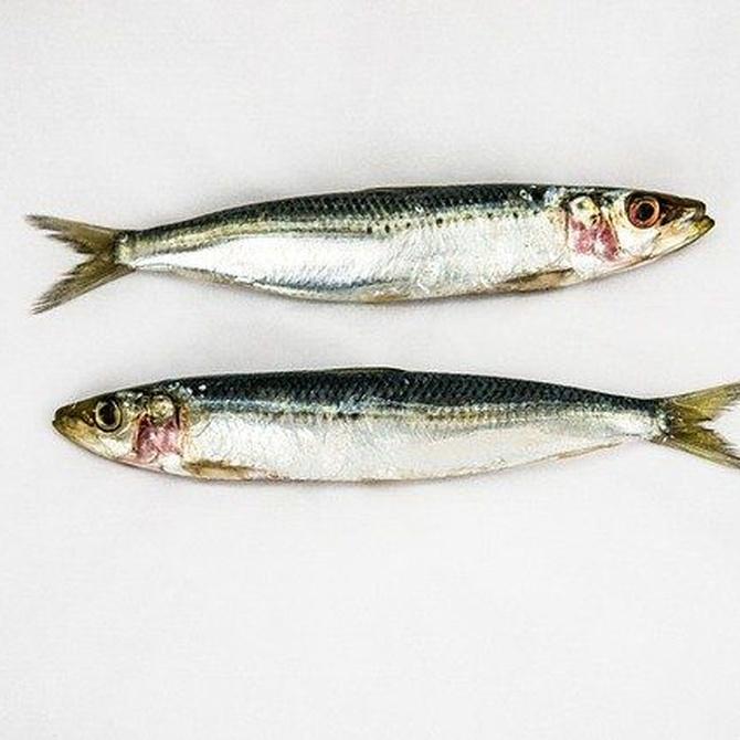 La temporalidad en los pescados