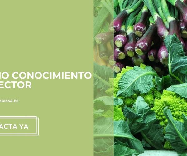 Tienda ecológica en A Coruña   Horta + Sá