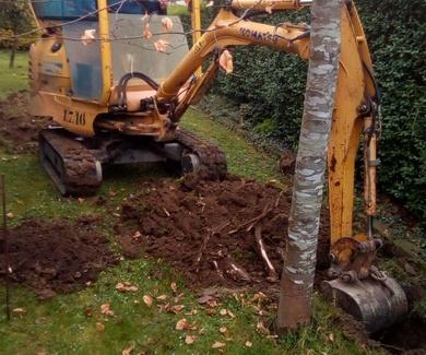 Transplante de árboles Bizkaia