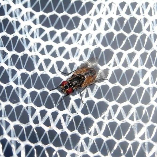 Las mosquiteras como aliados de nuestra salud