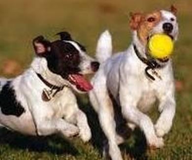El juego con el cachorro