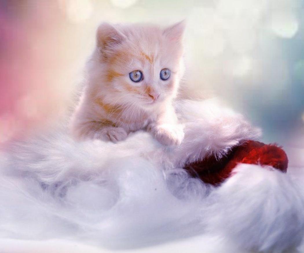 Cuidados y precauciones con un nuevo gatito en casa