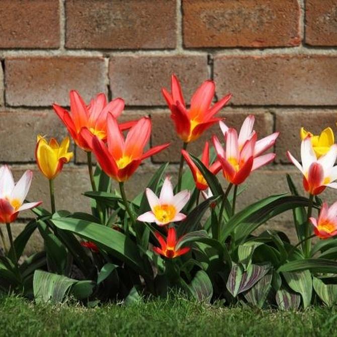 El jardín: reflejo de tu personalidad