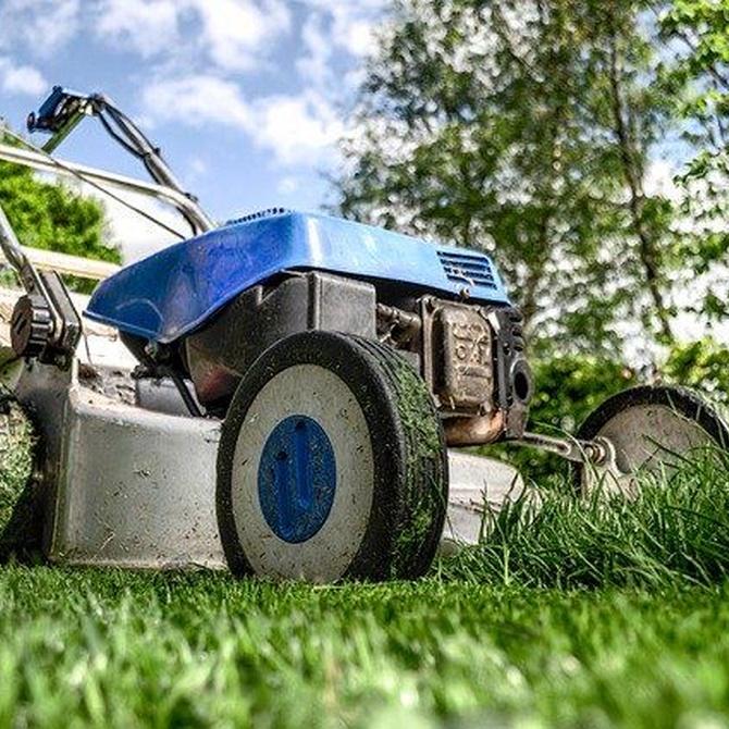 Trabajos importantes que debes realizar para el adecuado mantenimiento de tu jardín