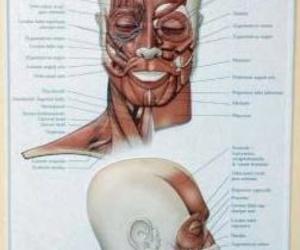 Tratamientos faciales en Santander