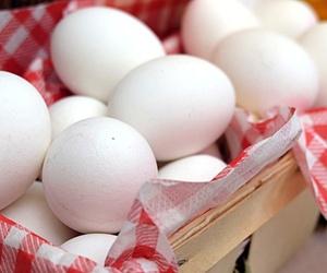 Huevos ecológicos en Granada