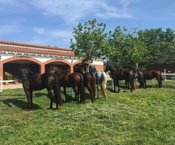 Clases de equitación en Girona