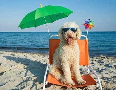Consejos para pasar un buen día de playa con tu perro