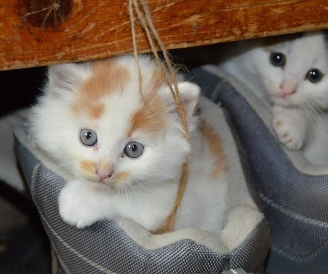 El calendario de vacunación de los gatos