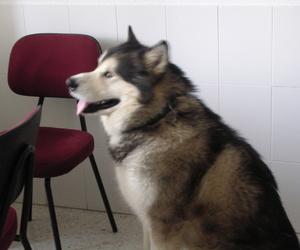 Veterinaria canina en Canillas - Hortaleza