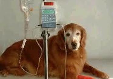 Oncología - Quimioterapia