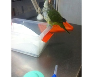 Servicios veterinarios: Clinica Veterinaria Tot Exotics Zoolandia