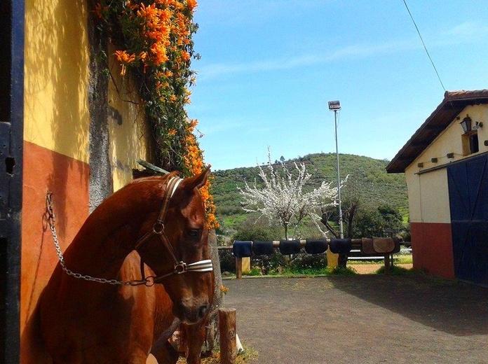Pupilaje (caballos en pensión): Servicios de Centro Hípico San Mateo