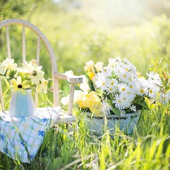 Cinco beneficios saludables de la jardinería