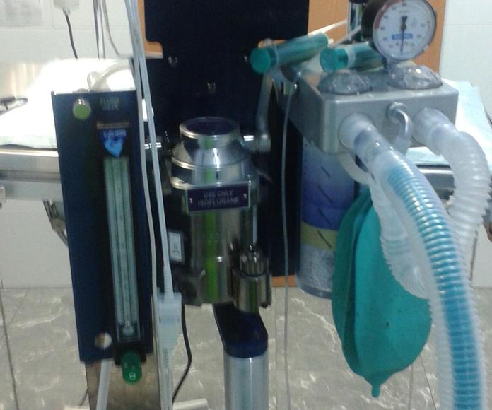 LA MÁQUINA DE ANESTESIA Y EL CAPNOGRAFO. Anestesia de la mejor calidad para una mayor seguridad. Gracias al capnógrafo nuestra mascota en todo momento durante la intervención tiene controladas las frecuencias cardiacas en sangre y CO2 en aire respirado