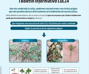 Boletín informativo de DEKALB acerca de los primeros estadios en el cultivo de colza