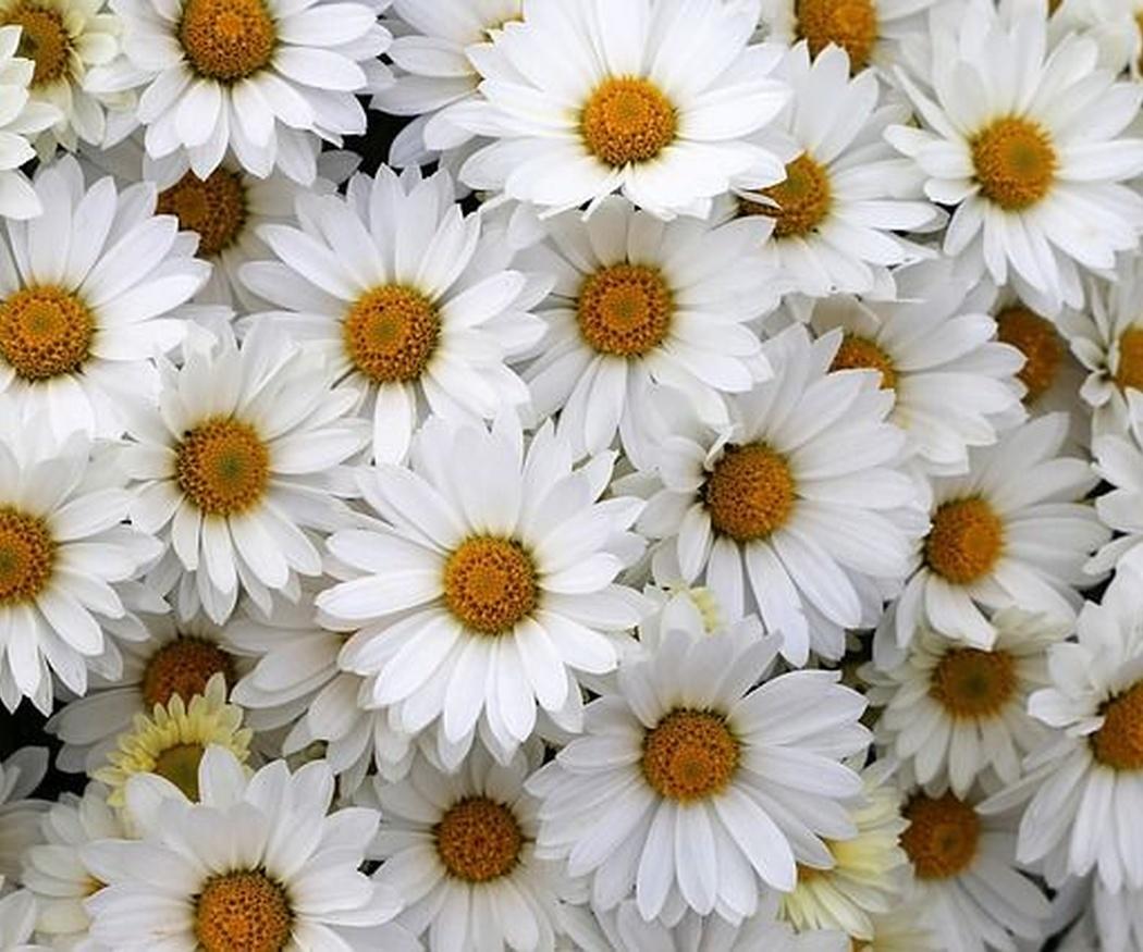 Tu flor según tu personalidad