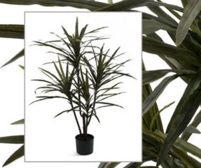 Planta Dracaena X4 Tela con maceta