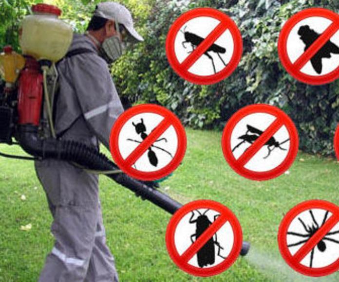 Desintectación:: CATÁLOGO de AR-Plagas