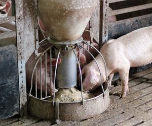 Mantenimiento de granjas porcinas en Sevilla