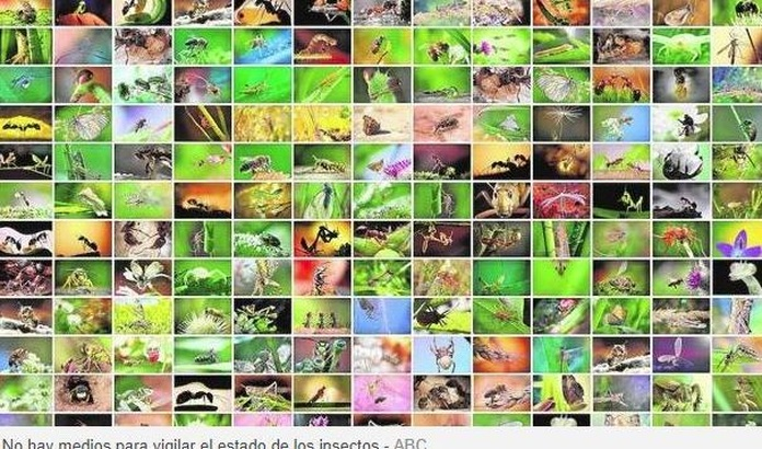Insectos: los seres que mueven el mundo, en peligro