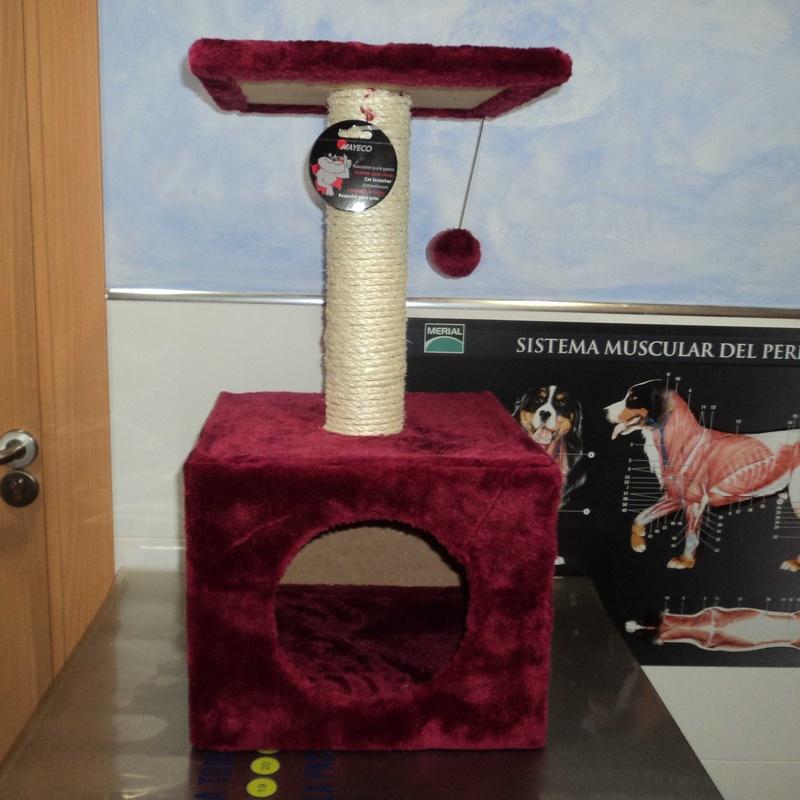Rascadores de gatos: Servicios de Clínica Veterinaria Rocafort