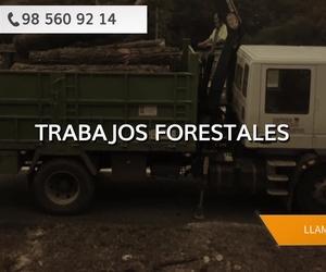 Trabajos forestales Asturias: Cofoso S.C.