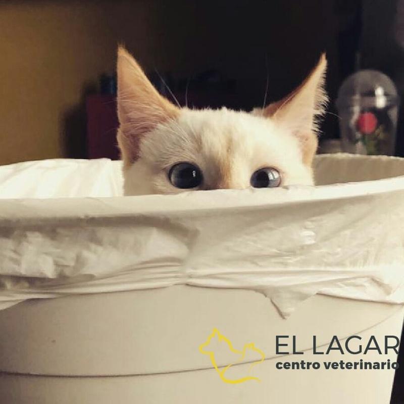 Salud e higiene: Tratamientos y especilidades de Centro veterinario El Lagar