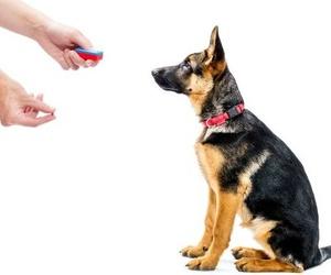 Adiestramiento y educación canina con refuerzo positivo
