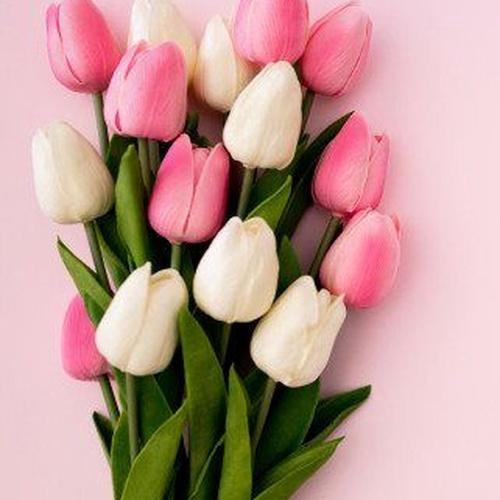 Sabías que en el siglo XVII los tulipanes eran más valiosos que el mismo oro, esta flor simboliza la inmortalidad y el amor.