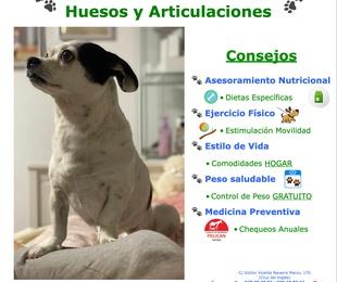 El Cuidado de TU Mascota:  Huesos y Articulaciones: Síntomas y Consejos