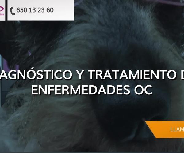 Veterinarios en Oviedo | Vission - Centro Oftalmológico Veterinario