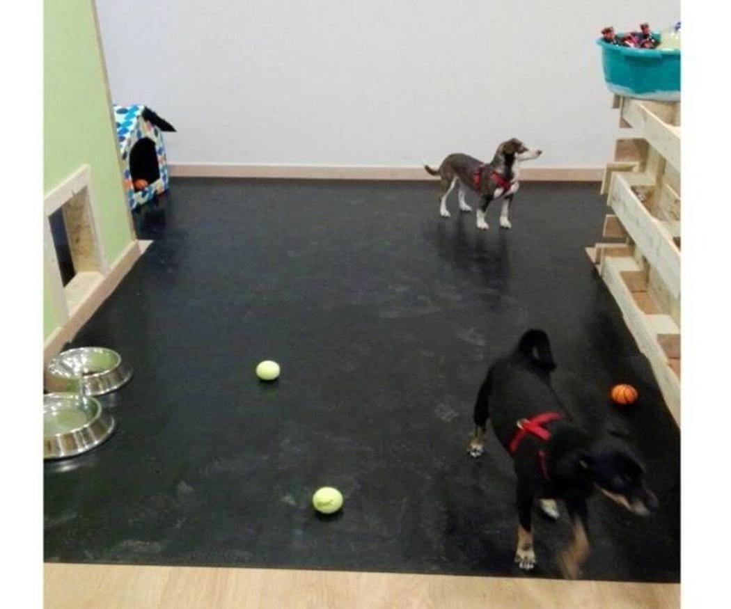 Un servicio de guardería canina en San Cugat del Valles