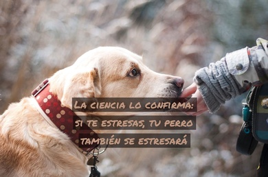 La ciencia lo confirma: si te estresas, tu perro también se estresará
