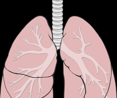 Los pulmones en Medicina Tradicional China