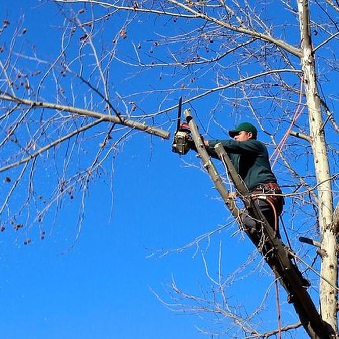 La importancia de podar bien los árboles