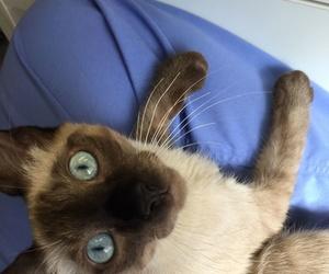 Atención veterinaria para gatos en Reus
