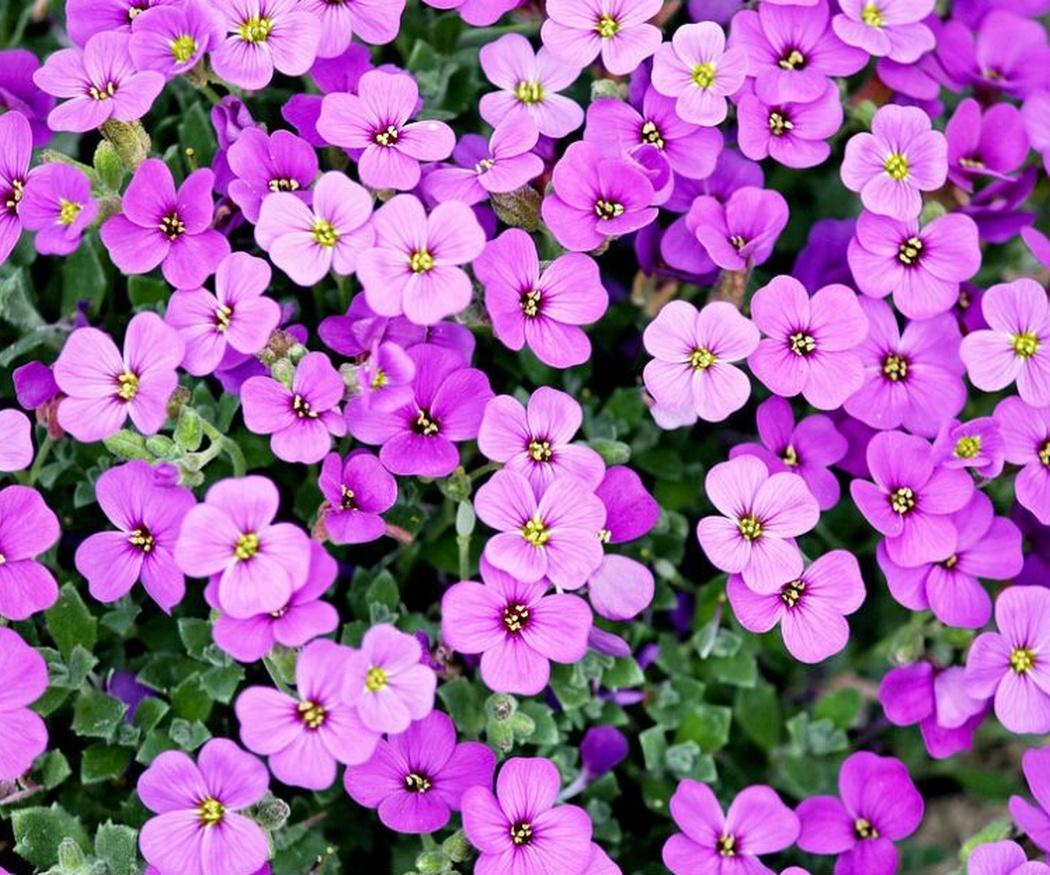 Plantar flores en tu jardín