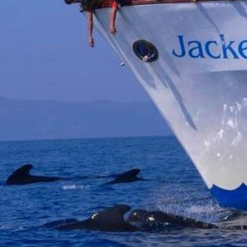 Avistamiento de delfines calderones comunes en Tarifa