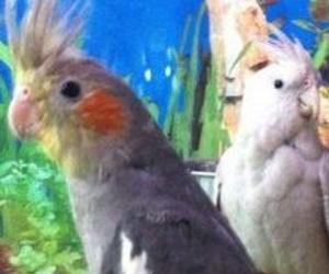 Accesorios aves y pequeños roedores