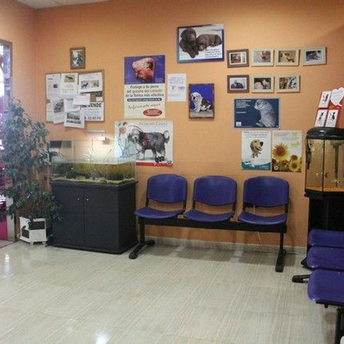 Clínica veterinaria 24h Molina de Segura