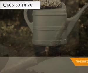 Poda en altura en Cádiz | Jardinería JMG