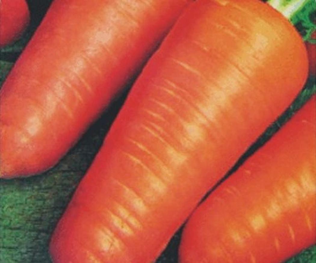 ¿Qué diferencia los distintos tipos de zanahorias?