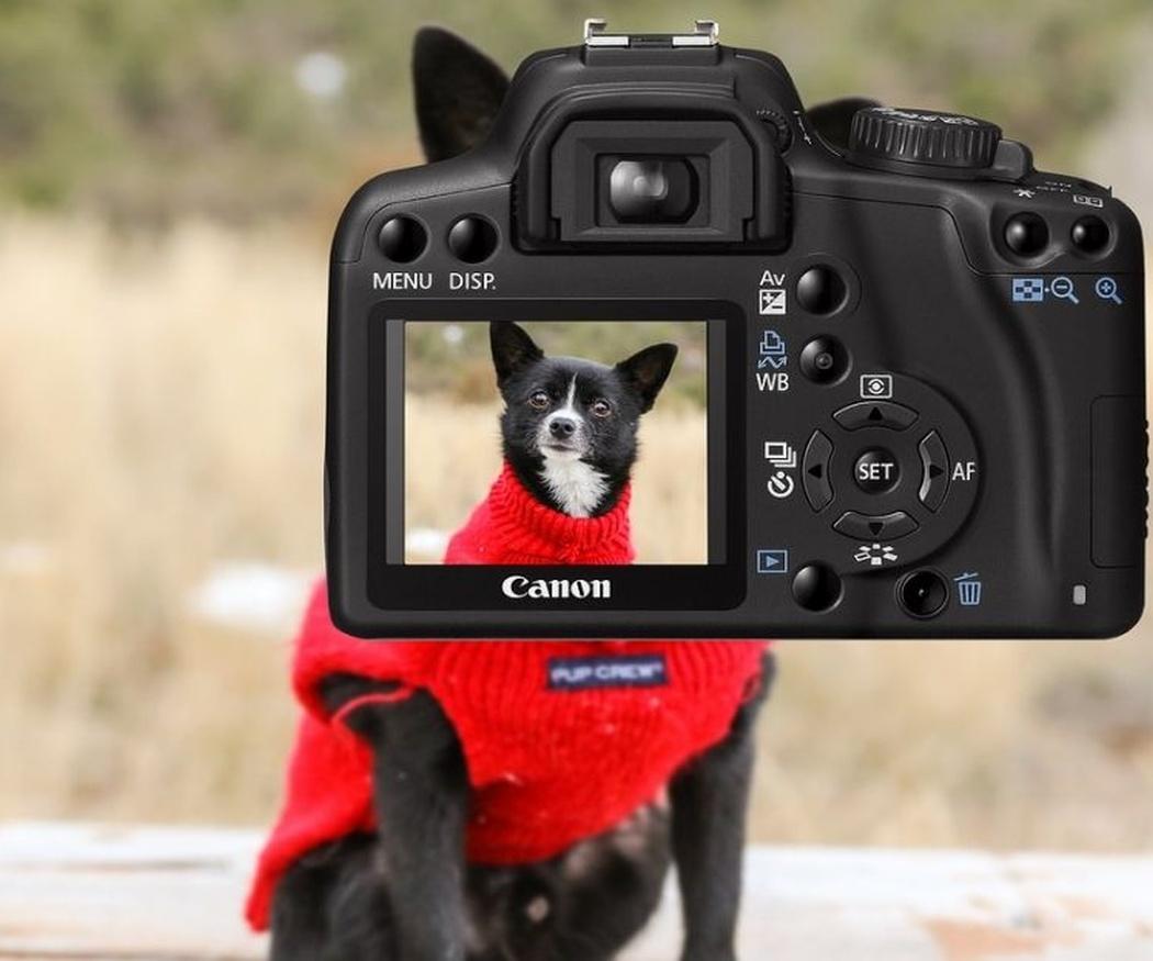 Las ventajas de hacerle fotos a tu perro