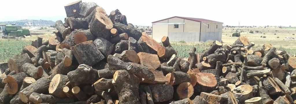 Desbroces forestales en Segovia | Servicios Forestales  FSV