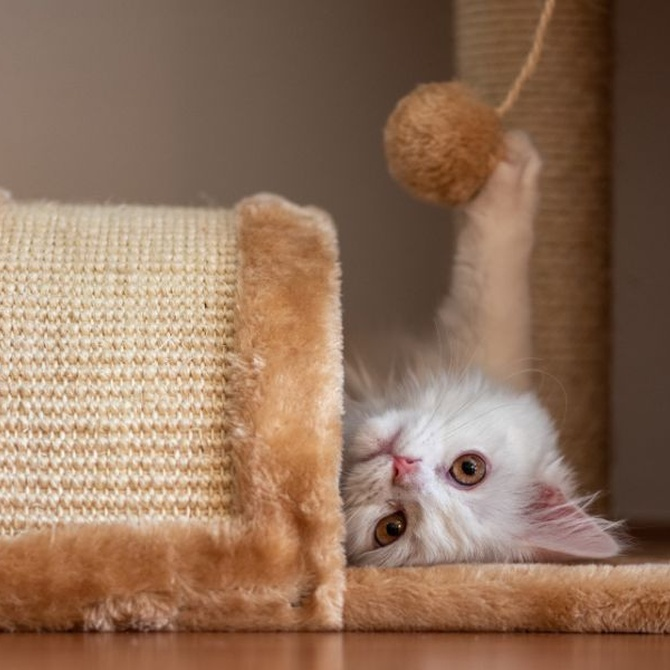 Cómo saber si tu gato es feliz