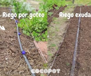 Comparativa del riego por goteo y el riego exudante
