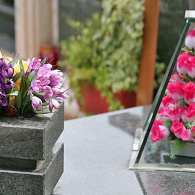 Cuidado y decoración de interiores con plantas
