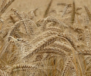 Venta de cereales al por mayor en Cuenca